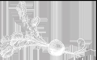 Radis noir en blanc logo